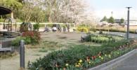 市民ミュージアム前の芝生の広場の様子