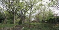 木漏れ日の森の石段の上にある森の様子