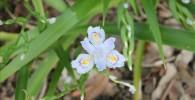 白に黄色の模様の花びらの美しい植物