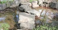 池泉の石の橋を渡る