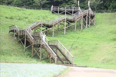 ポピー、コスモス園の階段