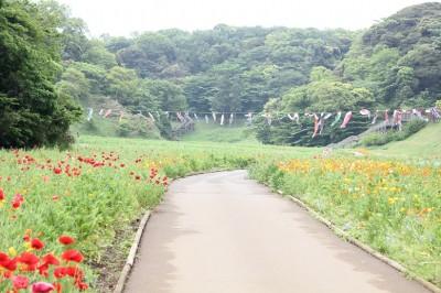 くりはま花の国の入り口近くのポピー園