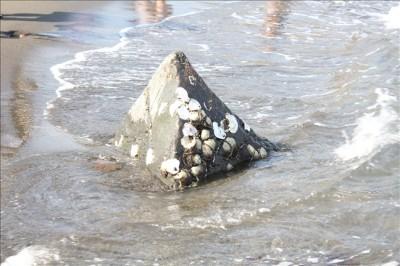 三角の岩にへばり付いている岩ガキ