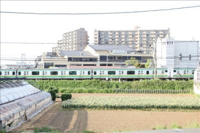 公園から見える湘南新宿ライナー