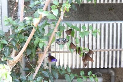 昆虫園の蝶々たちの写真