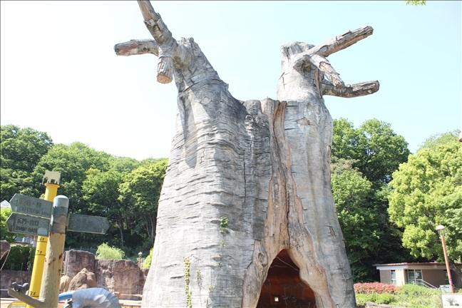 多摩動物公園のバオバブ
