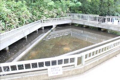 こどもの杜の釣りの体験ができるじゃぶじゃぶ池