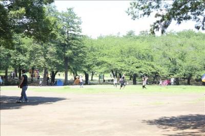わんぱく広場横の芝生の広場