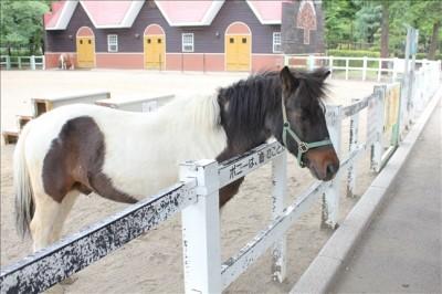 ふれあい動物園の乗馬体験ができる愛嬌のあるポニー