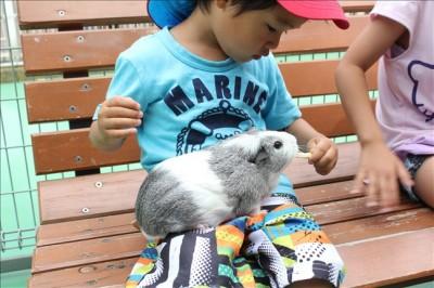 ふれあい動物コーナーで膝の上にモルモットを乗せて餌をあげる3歳の息子
