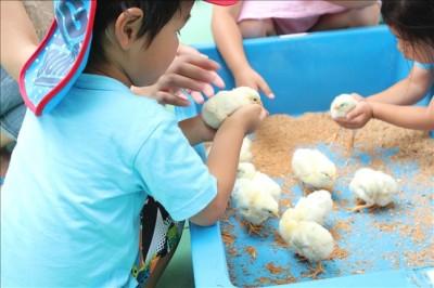 ふれいあい動物コーナーのヒヨコをやさしく手のひらに乗せる3歳児