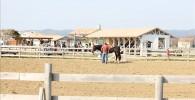 乗馬場のスタッフとお馬さんの姿