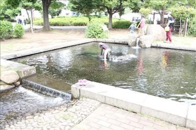 さむかわ中央公園のじゃぶじゃぶ池で水遊びする子供達