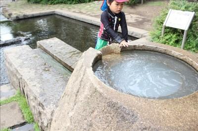 寒川中央公園のせせらぎの源泉で遊ぶ幼児