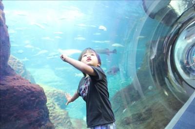 大きな水槽を興味深く観る幼児