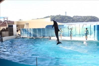 イルカショーでジャンプするイルカ