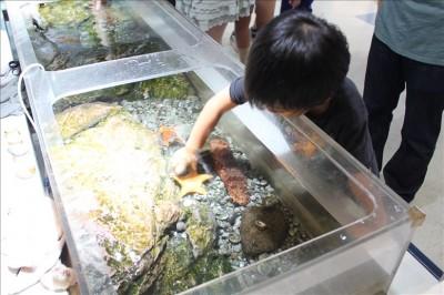 水槽のヒトデを触る体験
