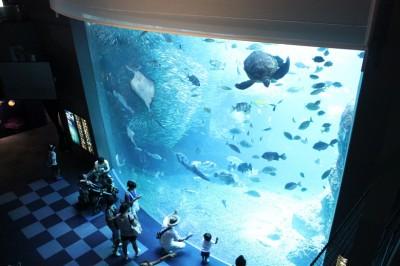 江ノ島水族館の巨大水槽にびっくり