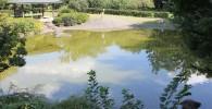 日本庭園横の池とパーゴラ