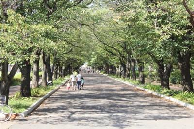府中の森公園の桜並木の遊歩道