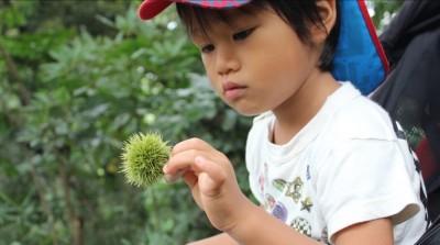 トゲトゲの栗を拾うペン太3歳