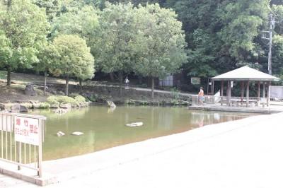 王禅寺ふるさと公園中央入り口の池