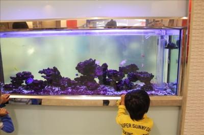 フォレオ四季のフォレオ四季の森歯科の水槽の熱帯魚をじっと見つめる3歳児