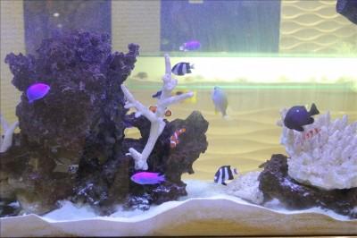 フォレオ四季の森歯科の美しい熱帯魚たち