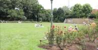 バラ園の芝生の広場
