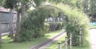植物のアーチ型トンネル