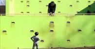 緑色のクライミングウォール