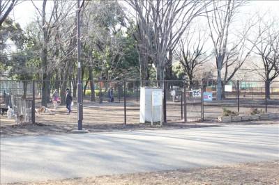 小金井公園内にある広いドッグラン