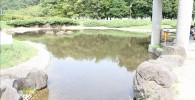 四阿横の池