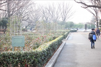 大蔵運動公園バラ園