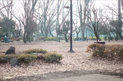 大蔵運動公園冬の景色