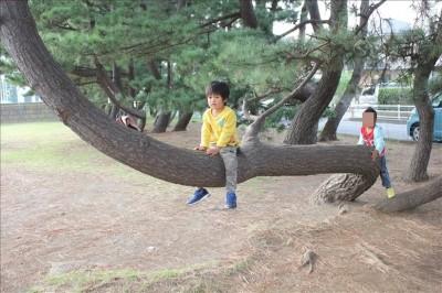 松ノ木にまたがる3歳児