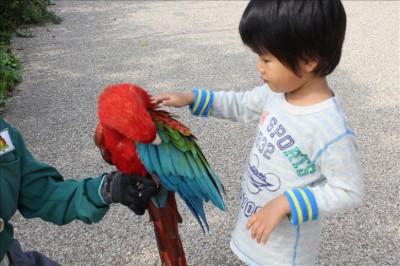 カラフルなオウムに触れる児童