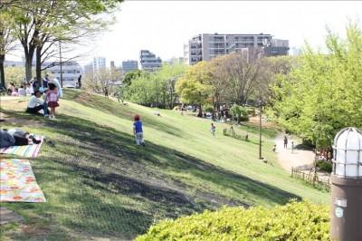 富士公園の芝の斜面