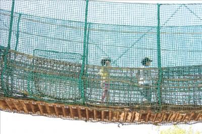 緑のネットのつり橋で遊ぶ