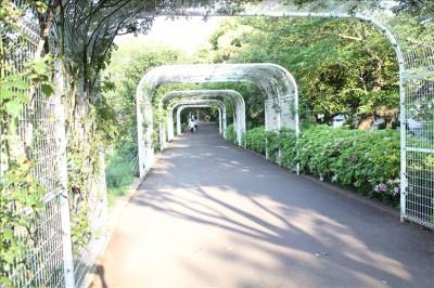 バラ園のトンネル通路