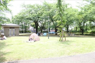 公園の芝生の広場