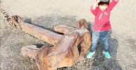 お台場海浜公園の大きなイカリ