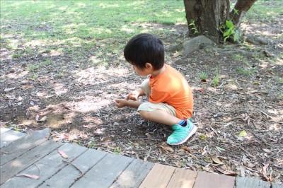 潮風公園の自然と触れ合う幼児