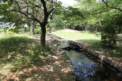 稲田公園のせせらぎの森