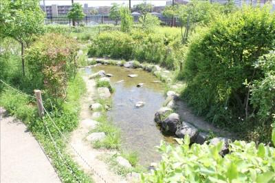 カッパーク鷺沼の水の生き物が観察できる池