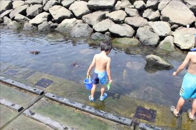 海風公園の親水護岸でカニとり