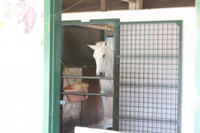根岸森林公園 の白馬
