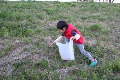 つくし採りを楽しむ幼児