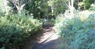 鶴亀松公園の脇の散歩道