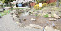 水遊び場と桜の木